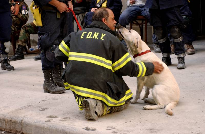 Navigate to Remembering the Four-Legged Heroes of the 9/11 Rescue and Recovery  page
