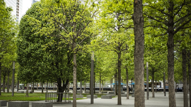 Navigate to This Arbor Day, We Celebrate the More Than 400 Trees on the Memorial Plaza page