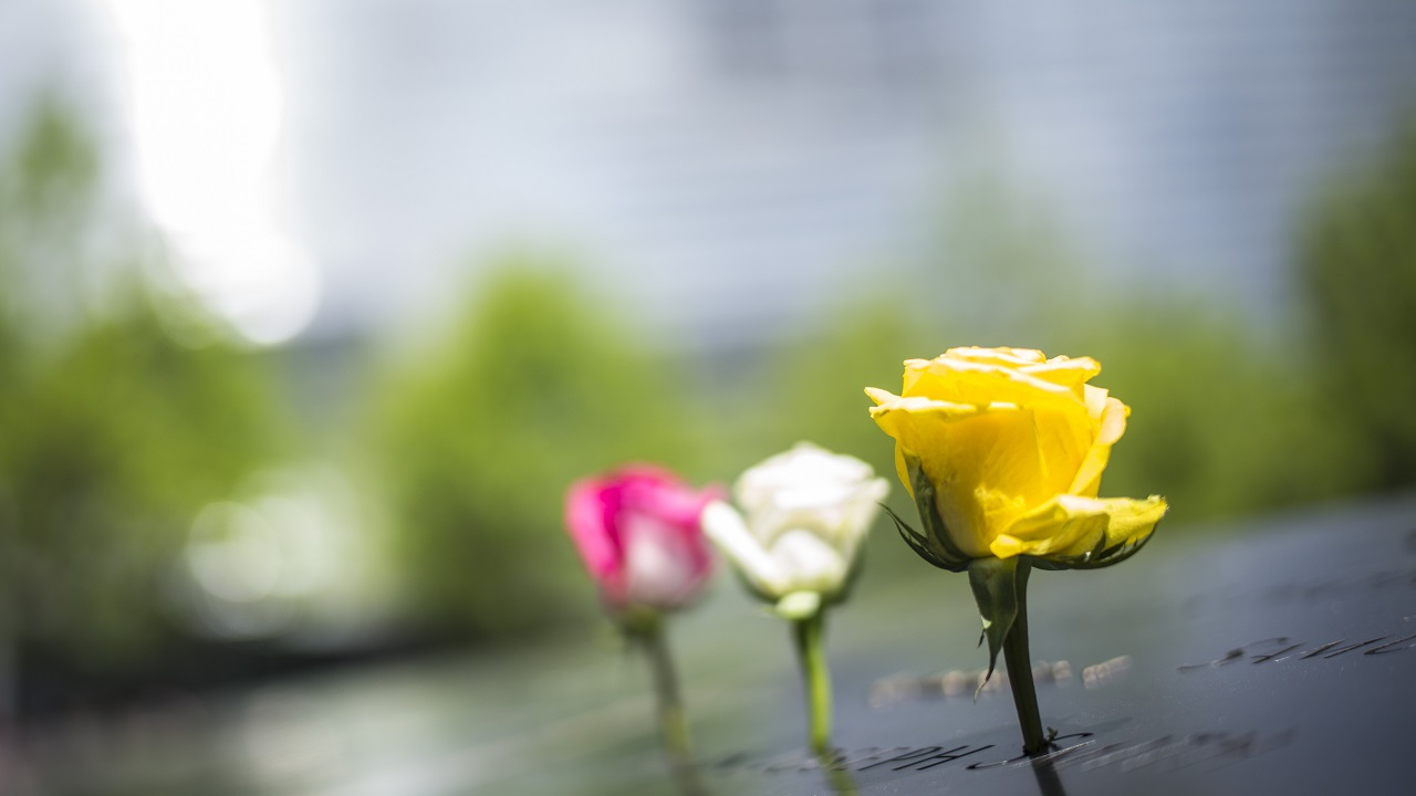 Three pink, white, and yellow roses stand at names on the bronze parapet of the Memorial.