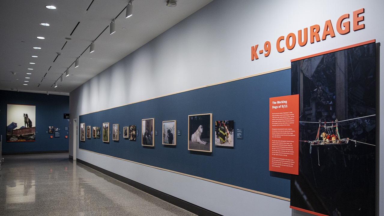 "A hallway with framed photographs of rescue dogs stretches through the frame. ""K-9 Courage,"" the title of the exhibition, appears above the wall of photographs."