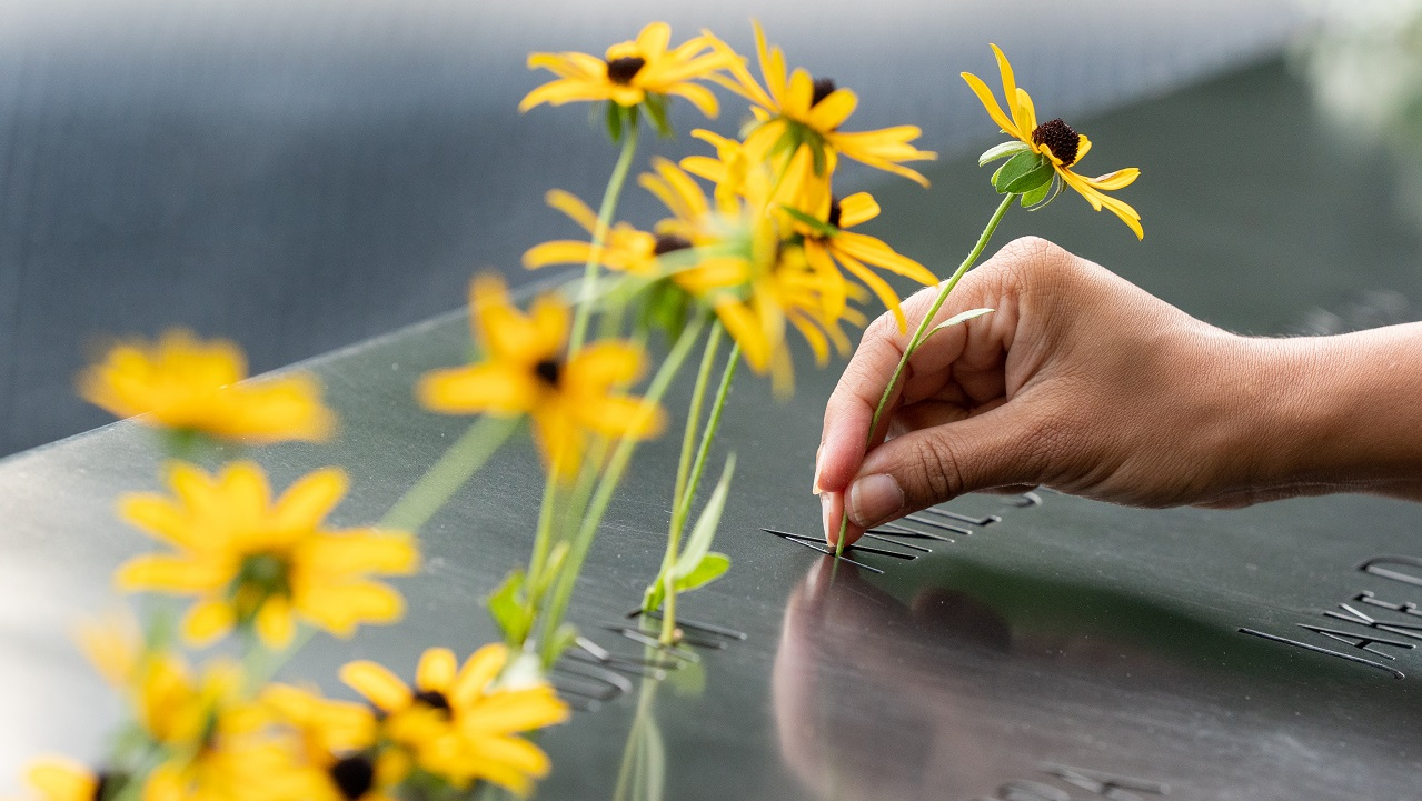 An array of daisies adorn the names on the bronze names parapets of the 9/11 Memorial.  On the right side of image, a hand is placing another  daisy in the 9/11 Memorial parapets adding to the dozen or so yellow flowers that have already been placed there. .