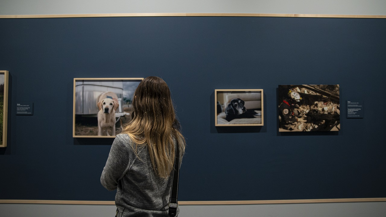 A woman with long, light brown hair and a gray sweater stands with her back toward the camera looking at a wall of framed photographs of rescue dogs.