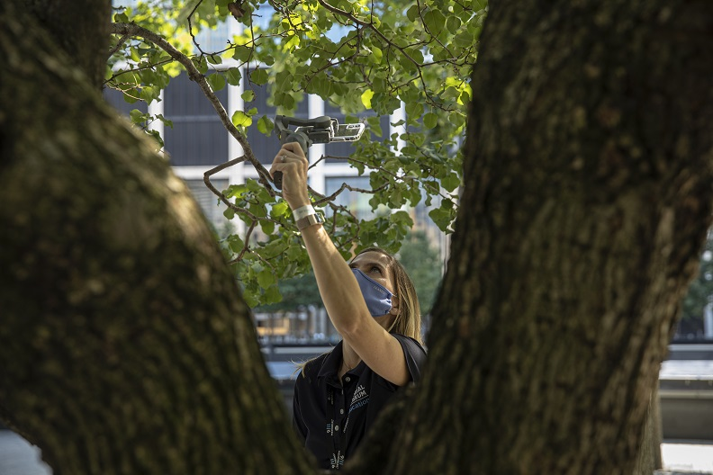 A woman holds an iPhone up to film the branches of the Survivor Tree.