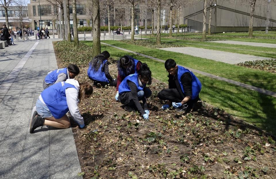 Six students kneel down in a bed of plants on Memorial plaza as they participate in National Volunteer Week.