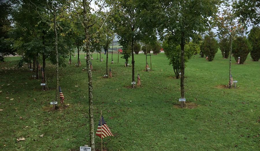 The Kinsale 9/11 Garden of Remembrance is seen in the countryside of Ireland. The garden includes a grove of trees, each with a plaque and a small American flag at its base.